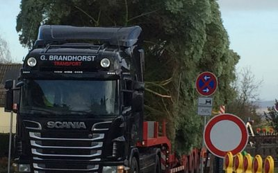 Kerstboom transport